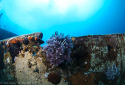 Wreck and Reef014.JPG