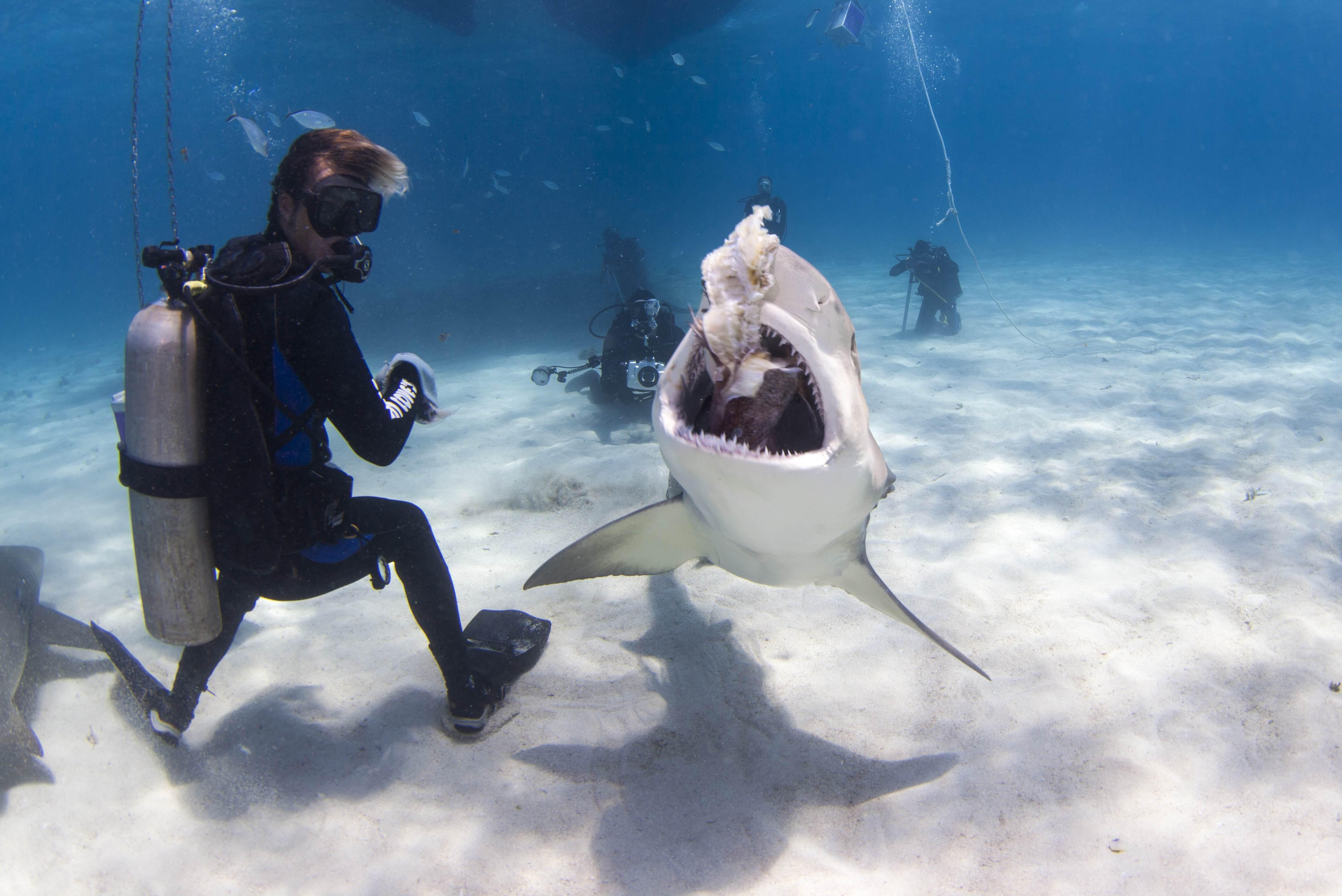 Shark003.JPG