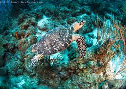 Turtles049.jpeg