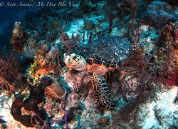 Turtles042.jpeg