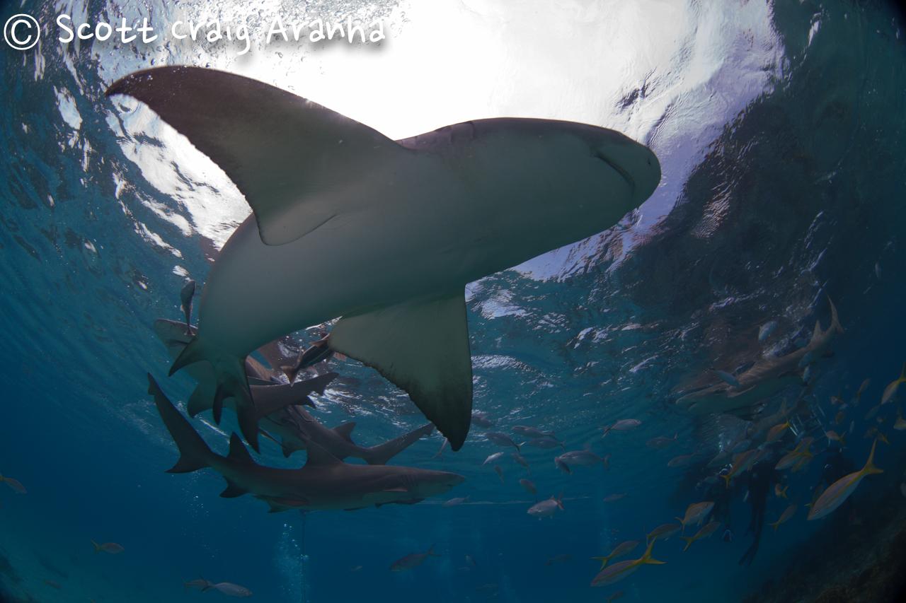 Shark017.JPG