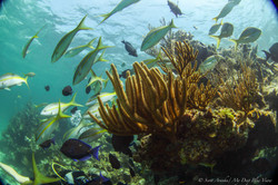 Wreck and Reef024.JPG