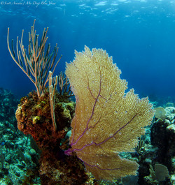 Wreck and Reef004.JPG