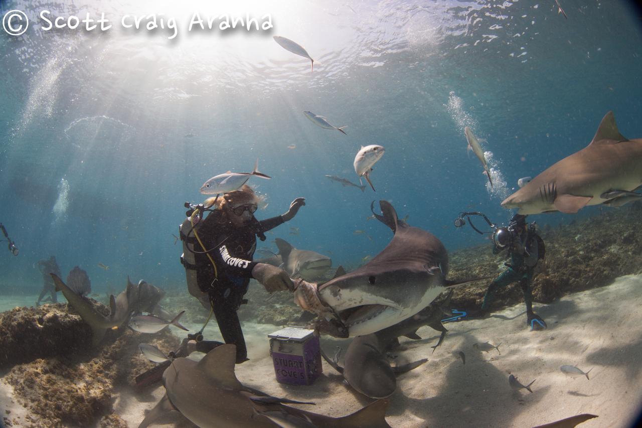 Shark049.JPG