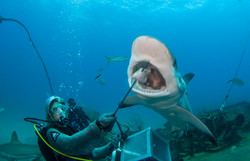 Shark075.JPG