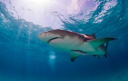 Shark011.JPG