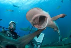 Shark076.JPG