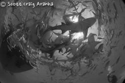 Shark044.JPG