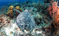 Turtles055.jpeg