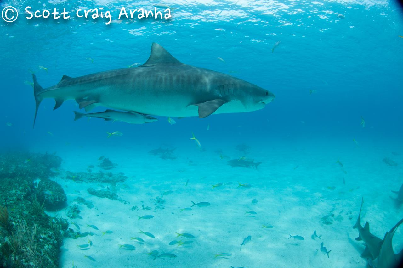 Shark028.JPG
