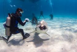 Shark002.JPG