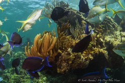 Wreck and Reef022.JPG