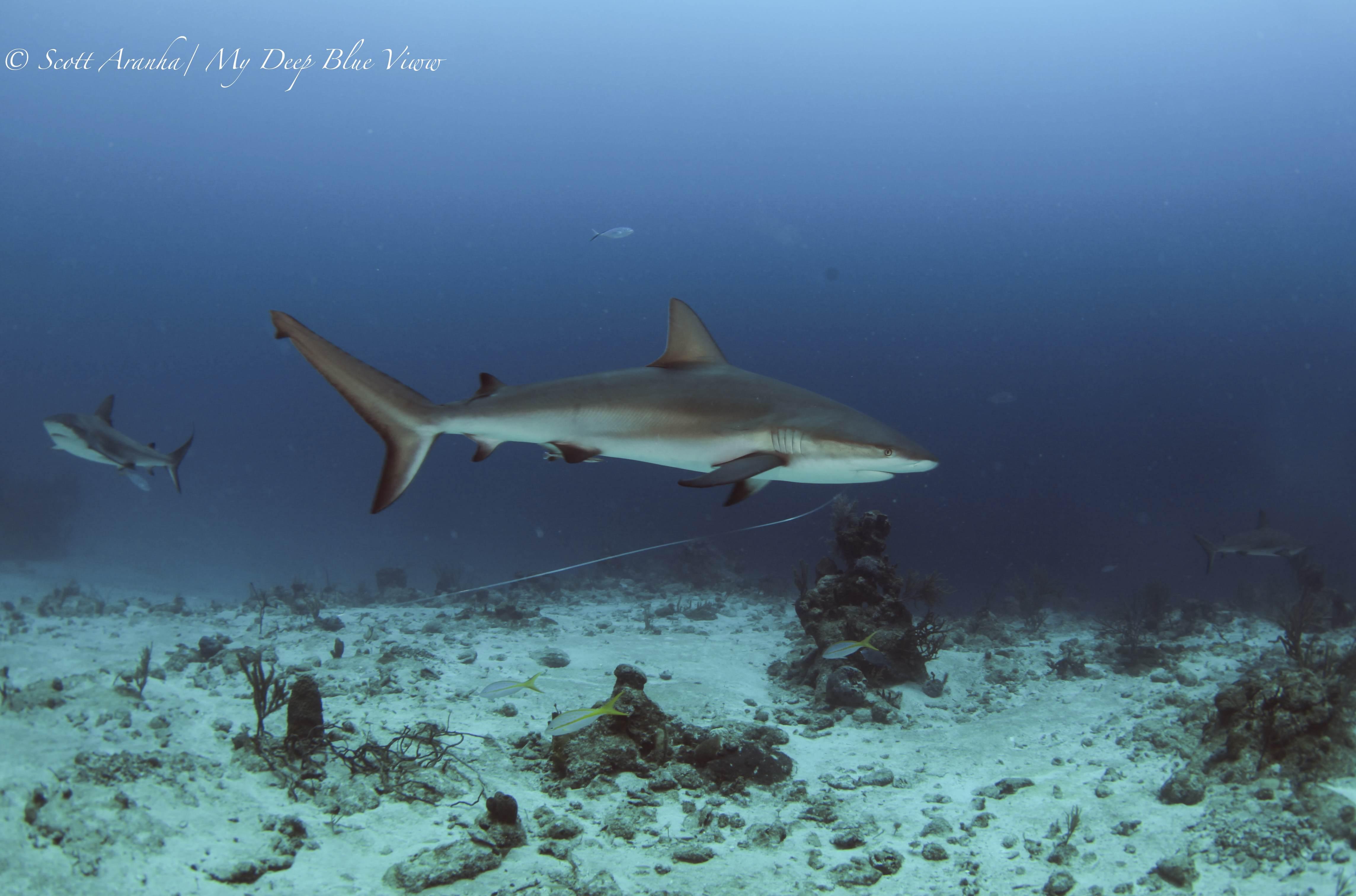 Shark101.JPG