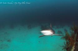 Shark098.JPG