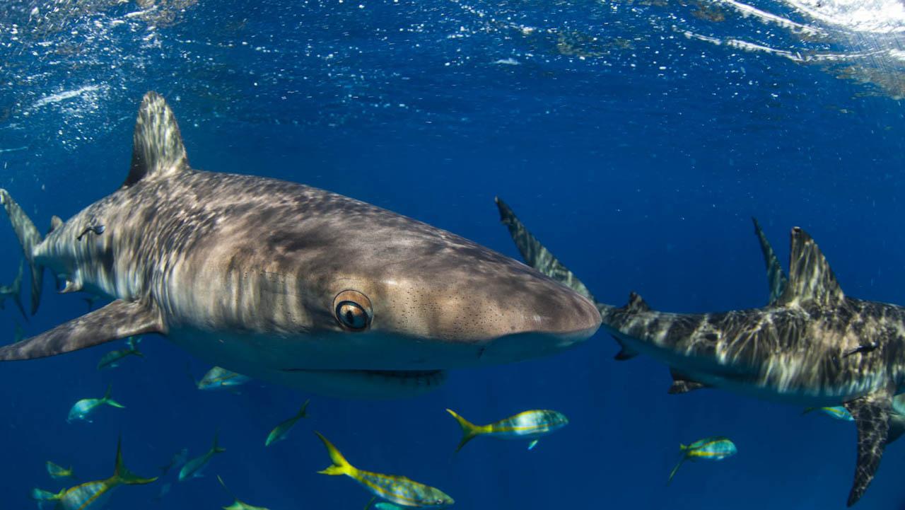 Shark062.JPG