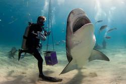 Shark015.JPG