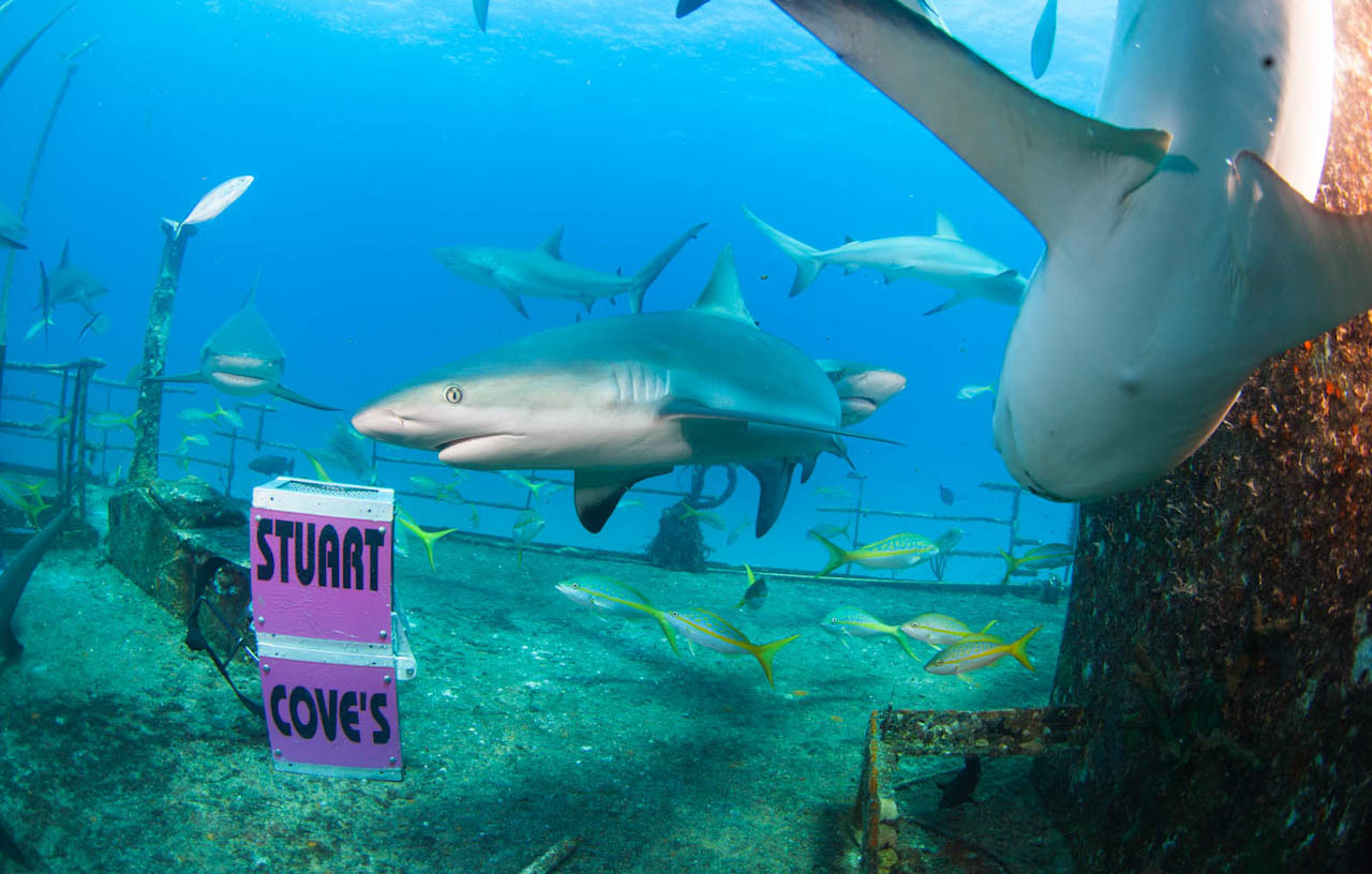 Shark063.JPG