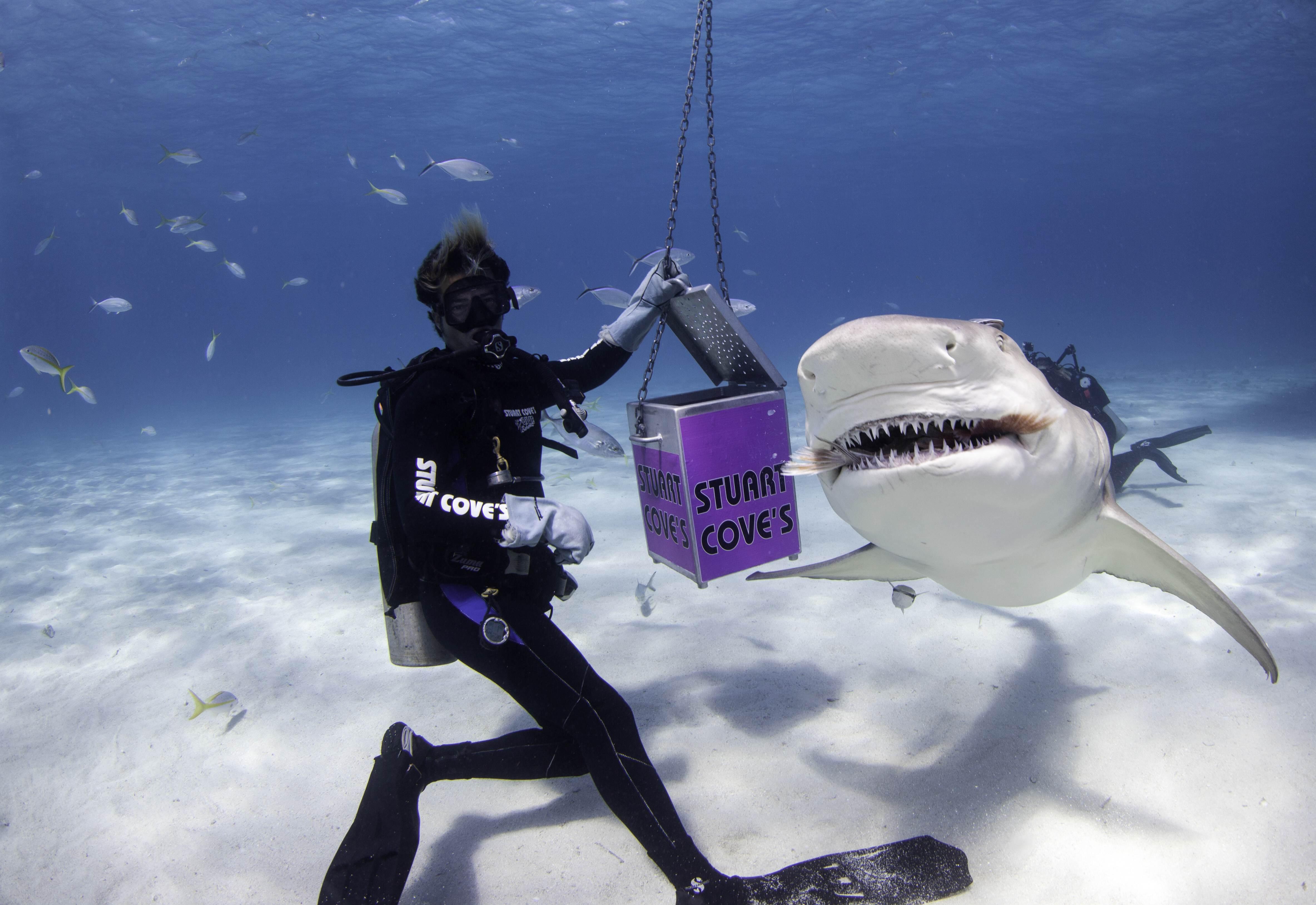 Shark012.JPG