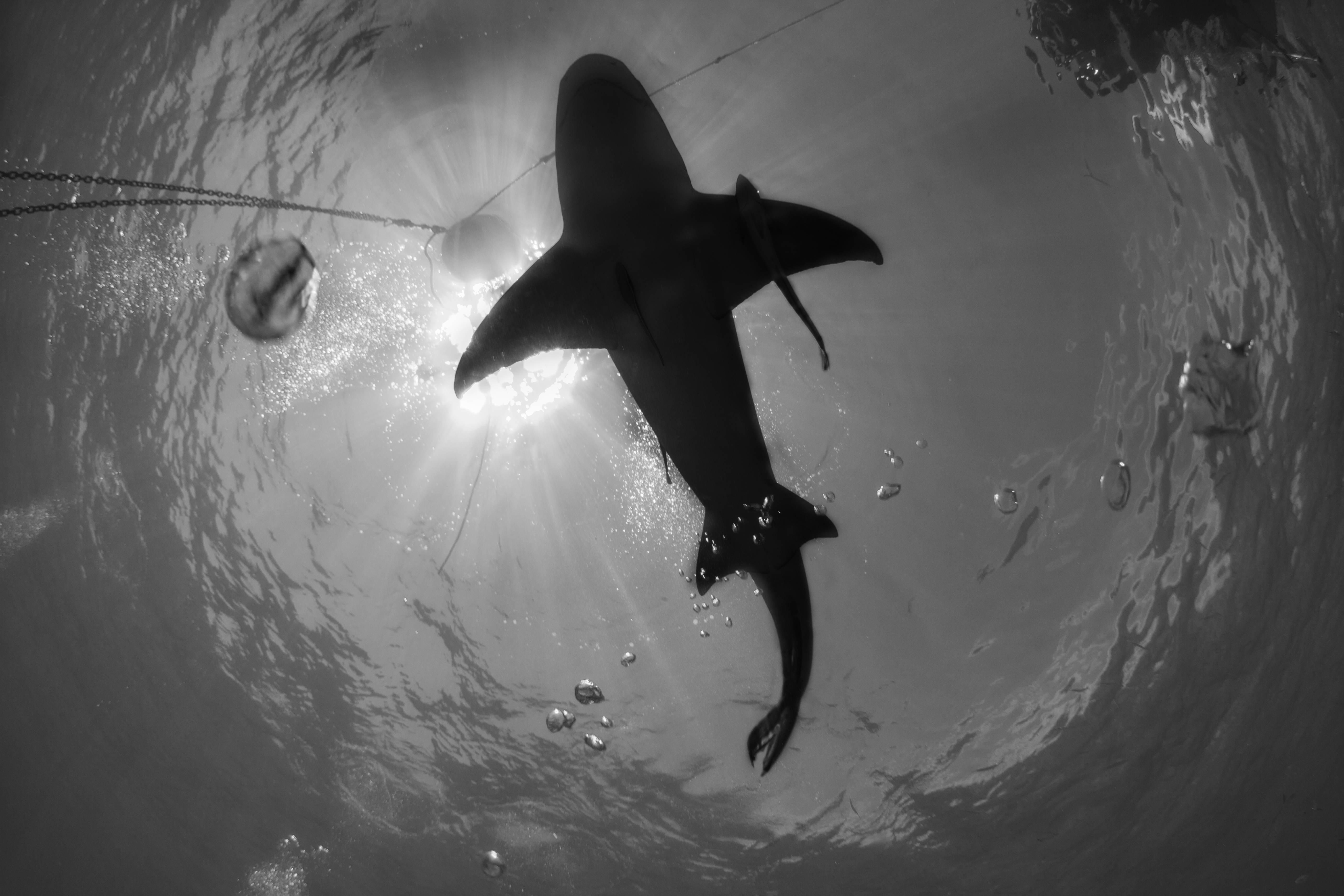 Shark007.JPG