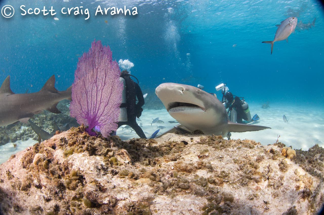 Shark050.JPG