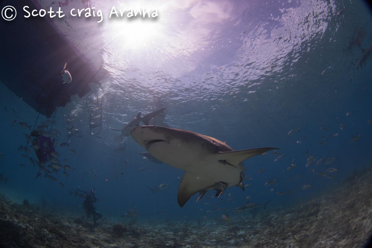 Shark038.JPG