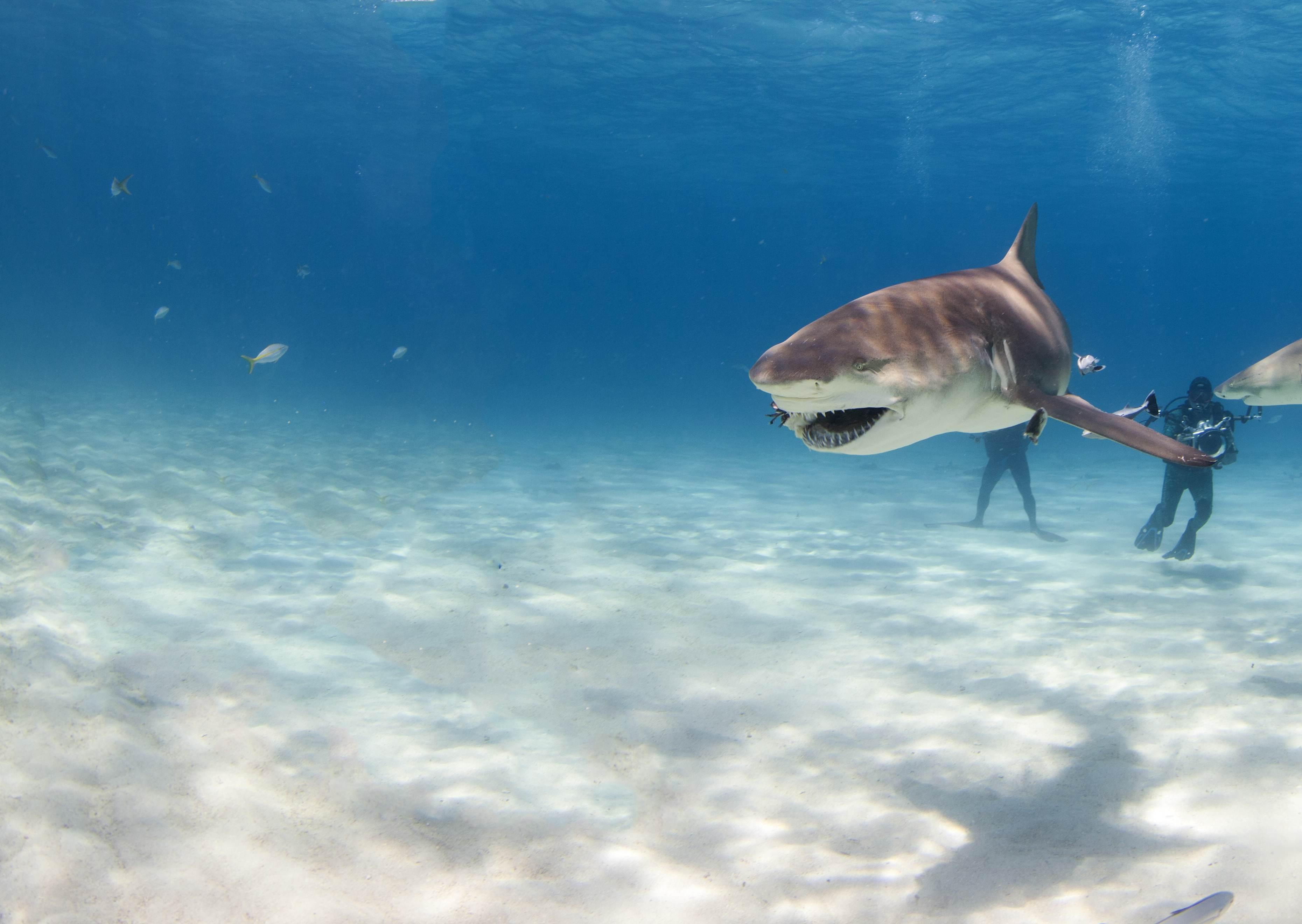 Shark010.JPG