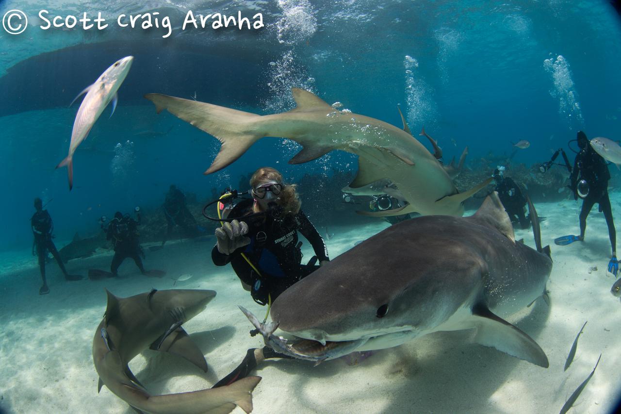 Shark032.JPG