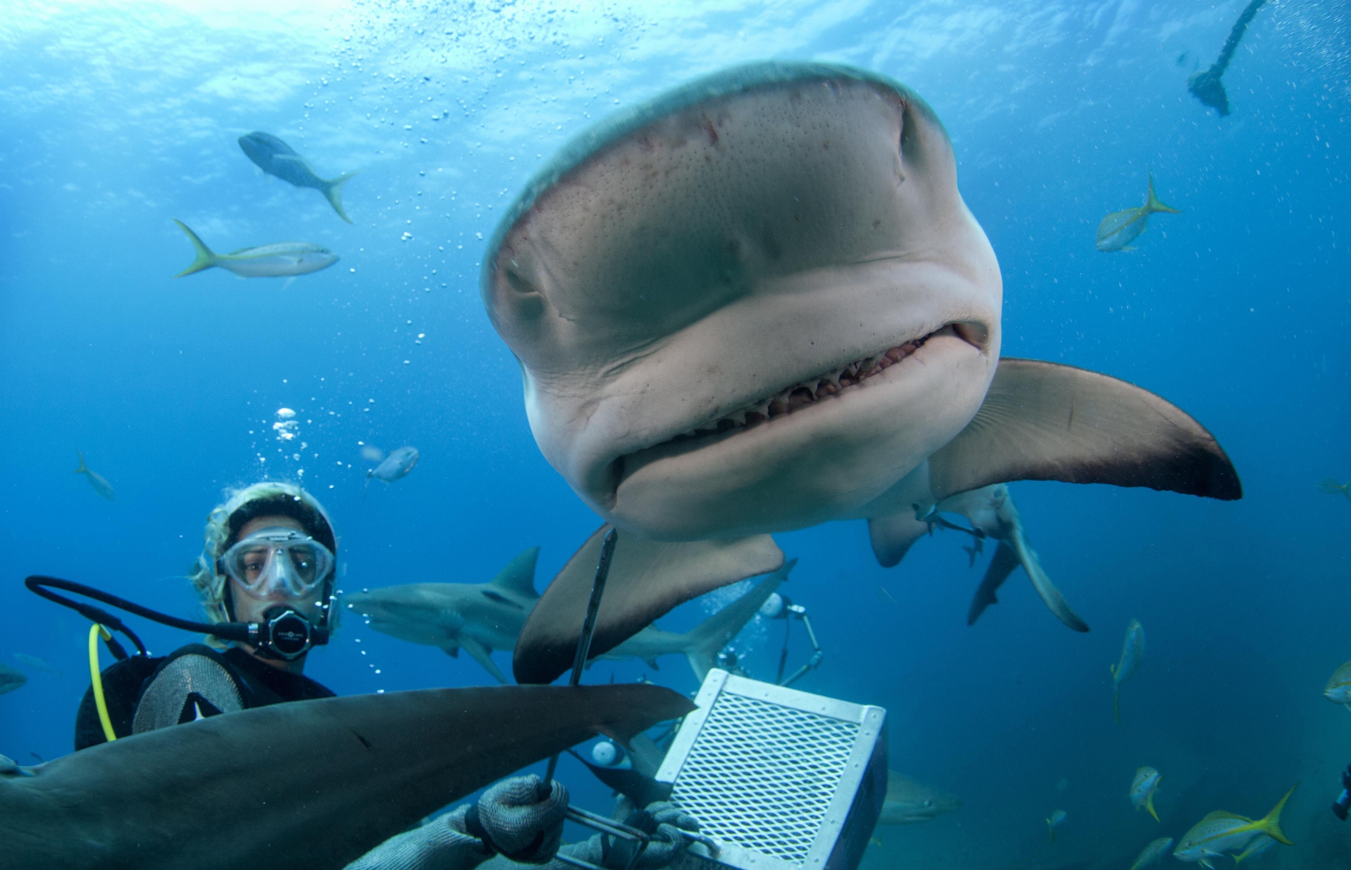Shark077.JPG