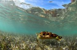 Turtles041.jpeg