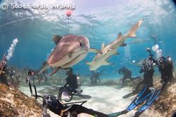 Shark022.JPG