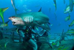 Shark065.JPG