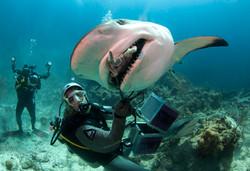 Shark069.JPG