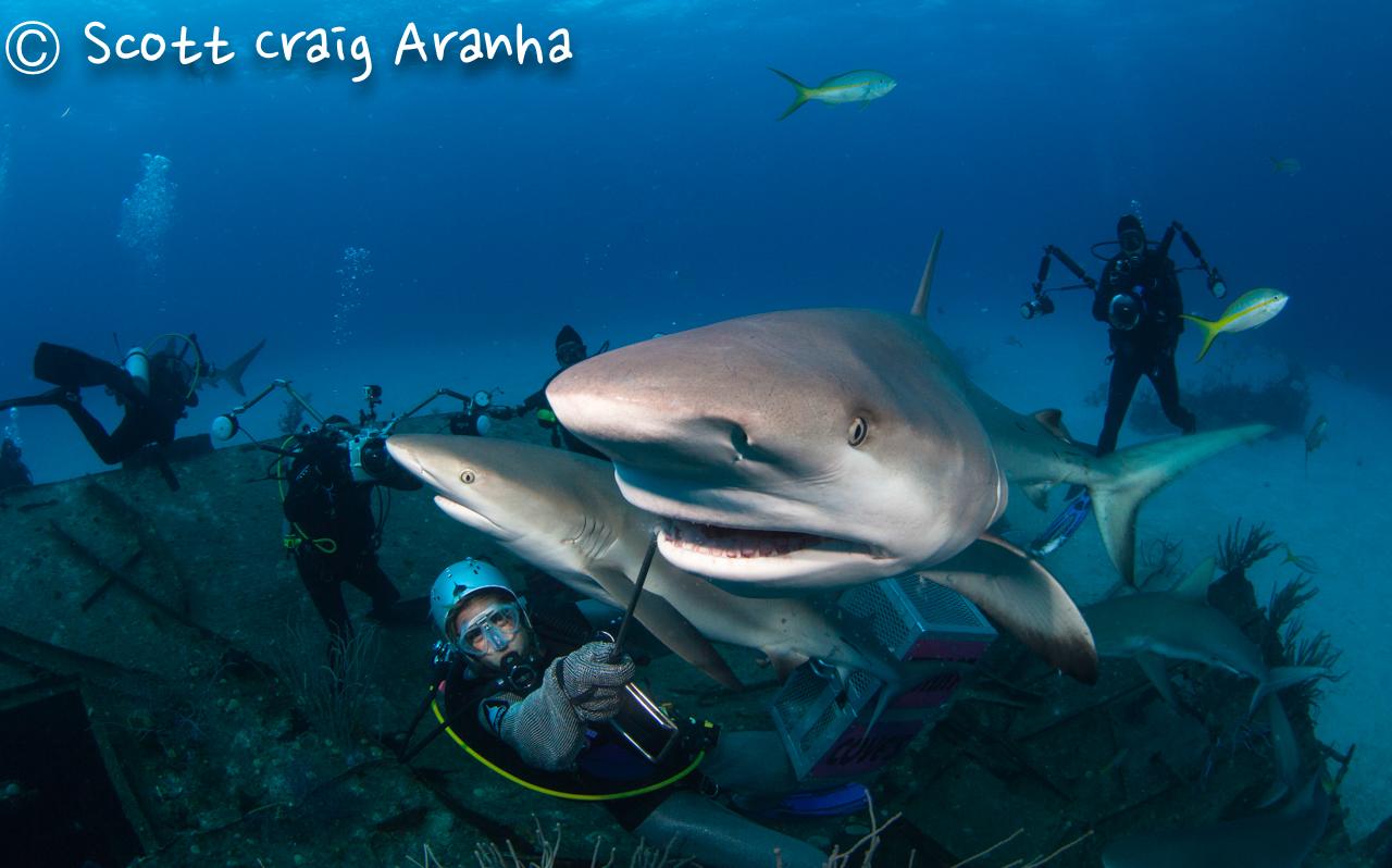 Shark084.JPG