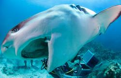 Shark070.JPG