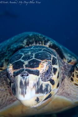 Turtles060.jpeg