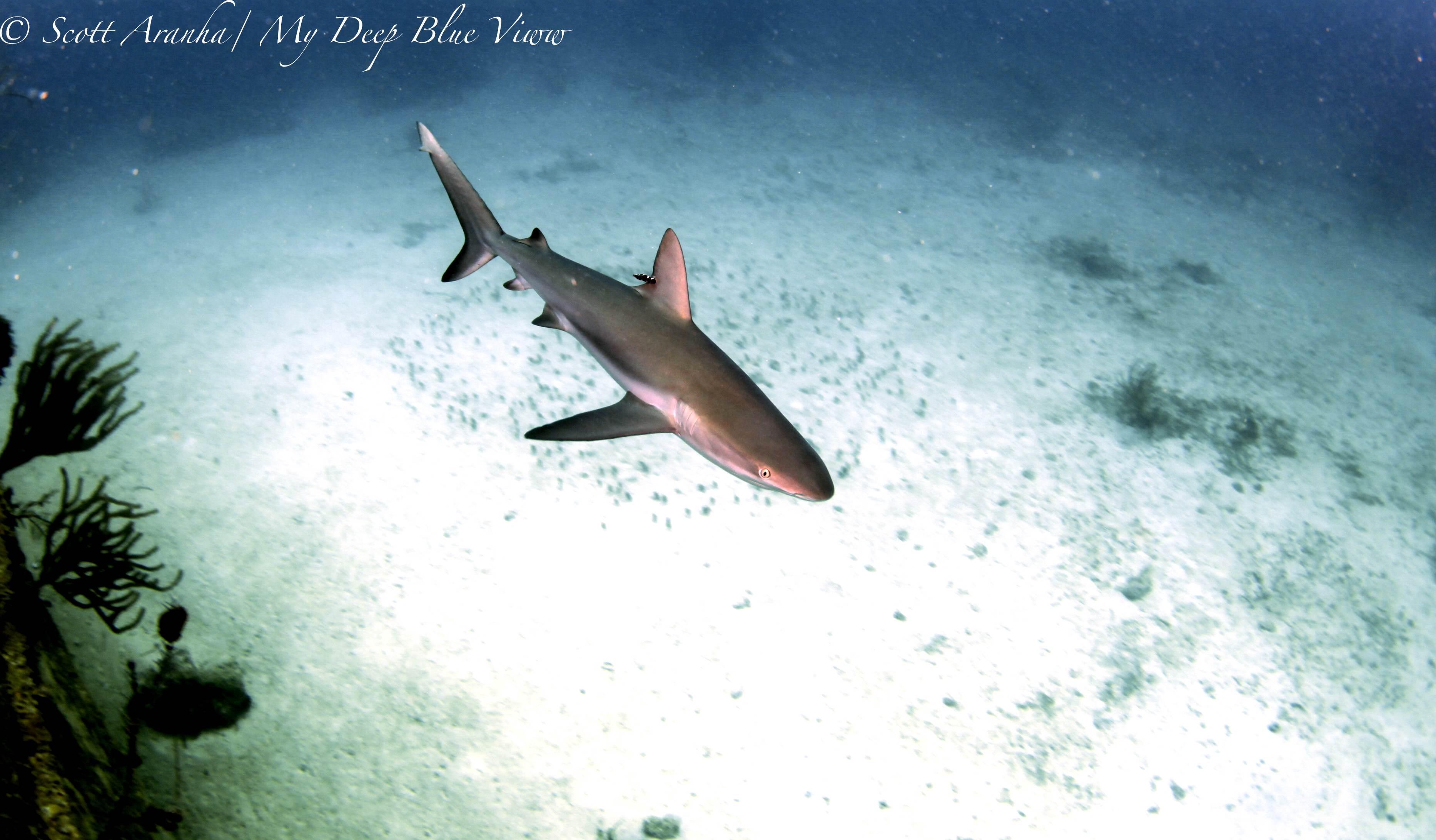 Shark094.JPG
