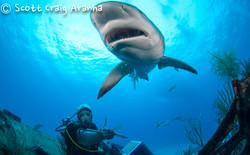 Shark080.JPG