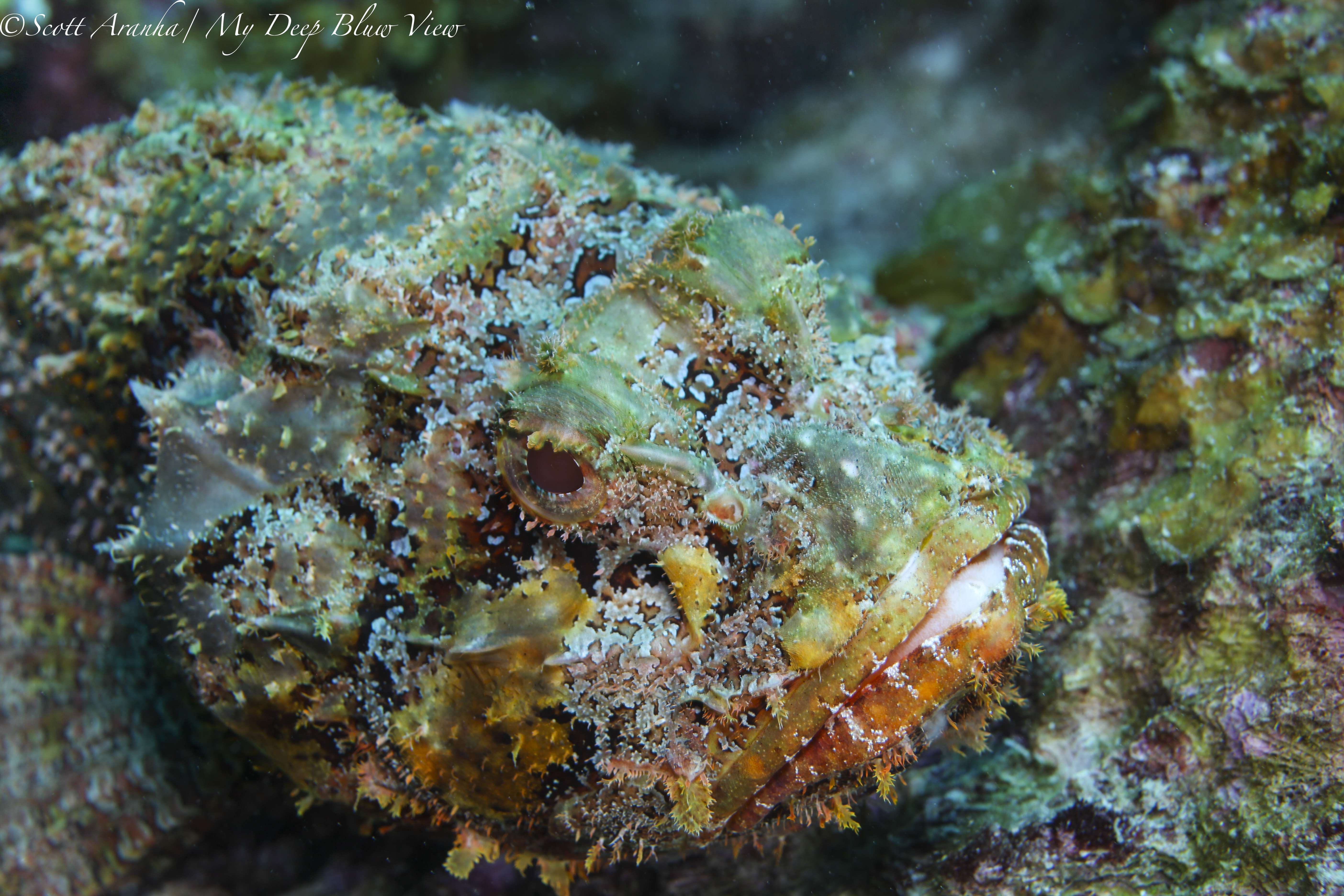 Wreck and Reef030.JPG