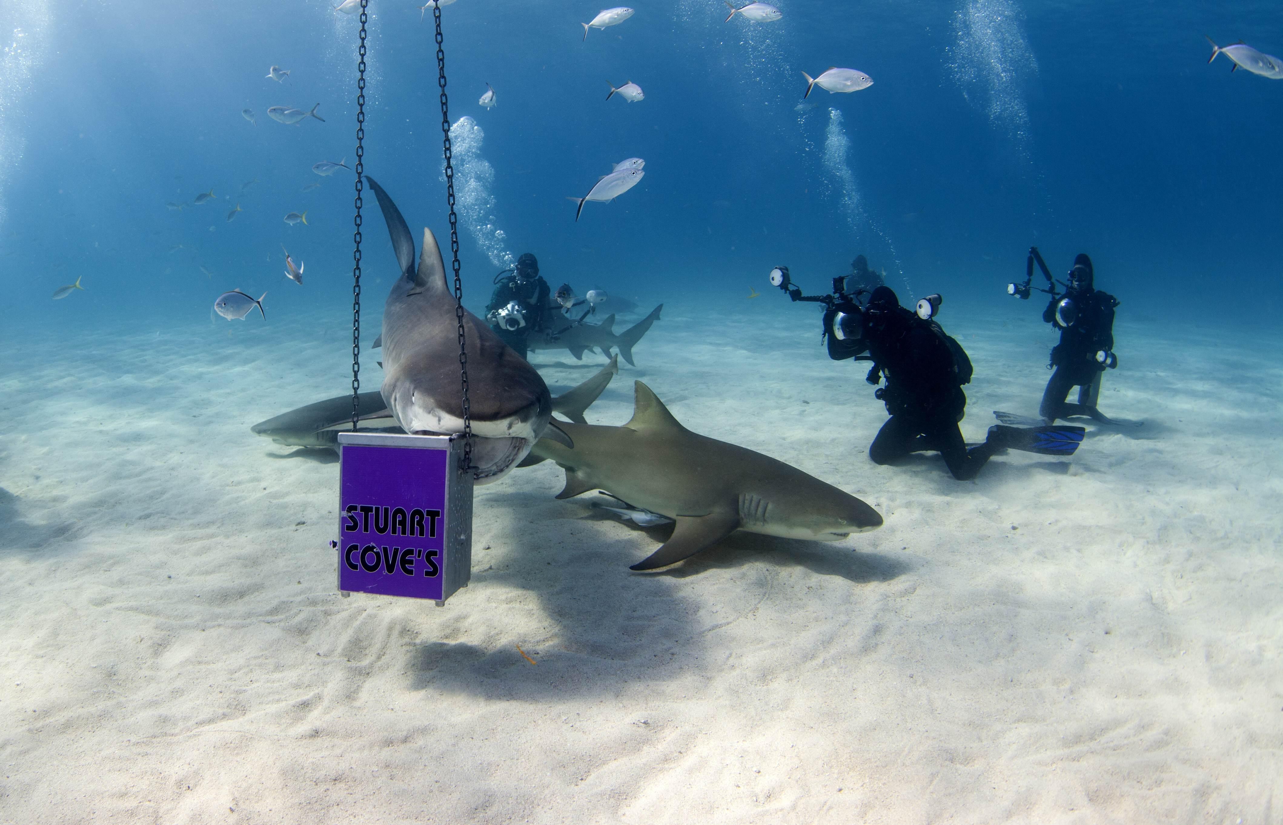 Shark014.JPG
