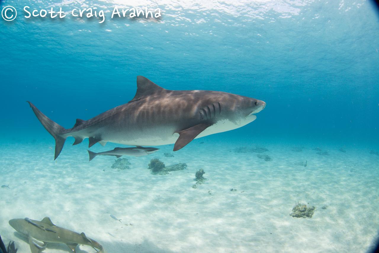 Shark036.JPG