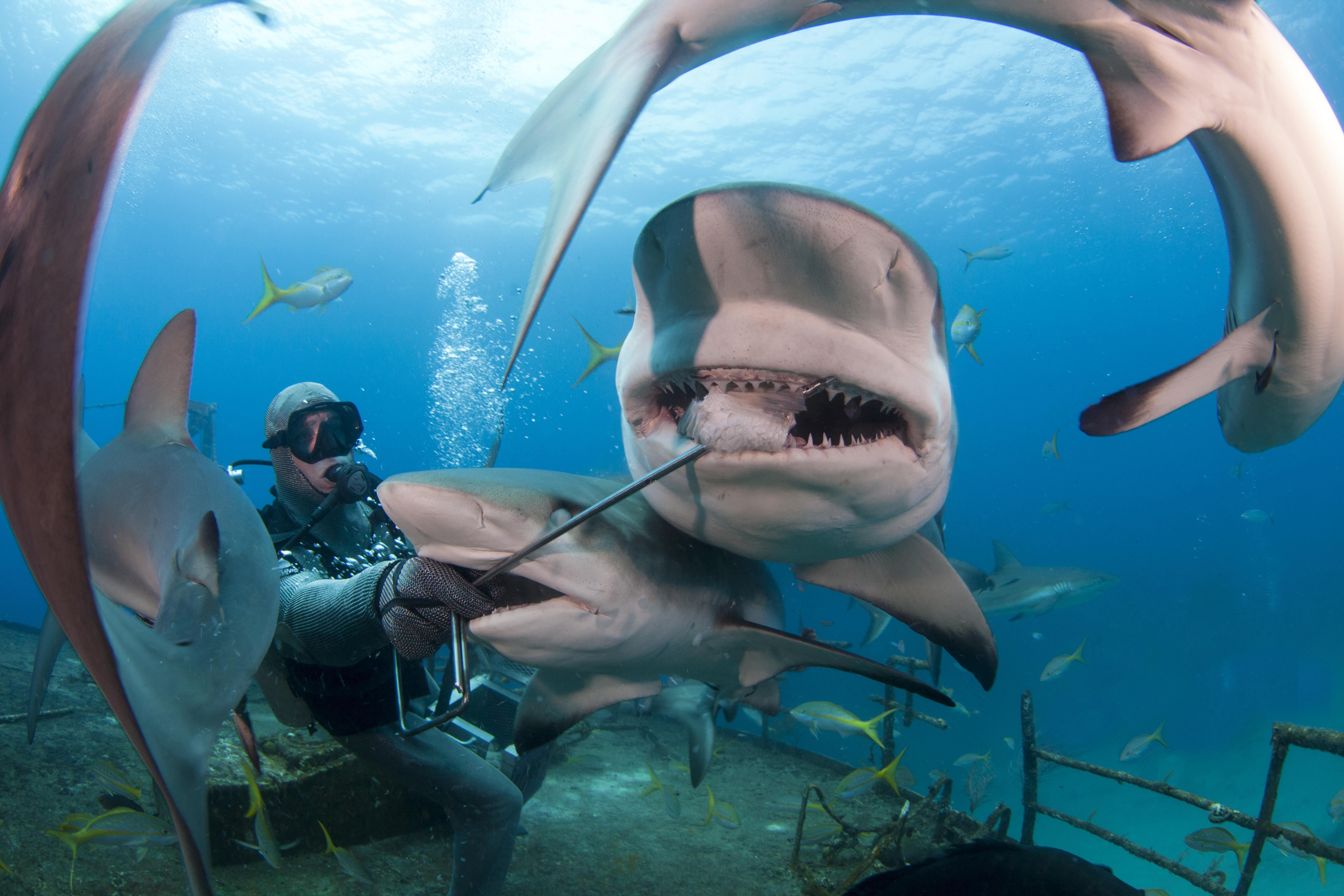 Shark072.JPG