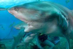 Shark071.JPG