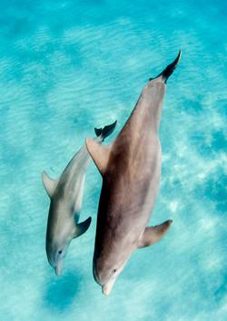 Dolphin002.jpeg