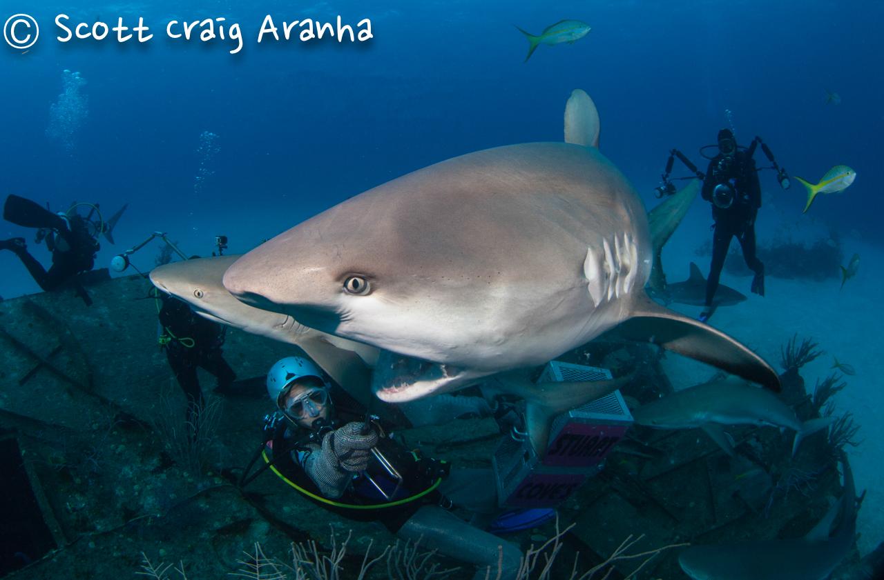 Shark085.JPG
