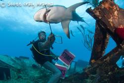 Shark081.JPG