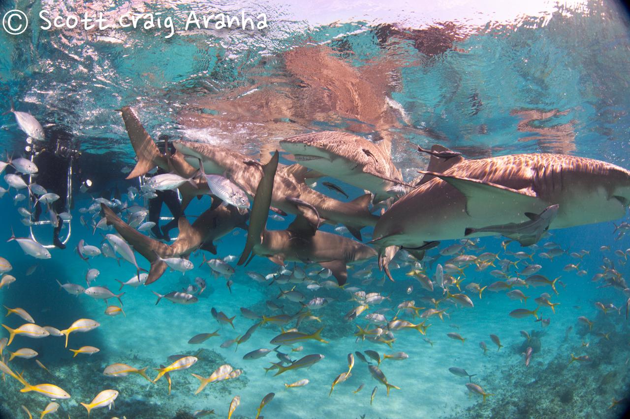 Shark053.JPG