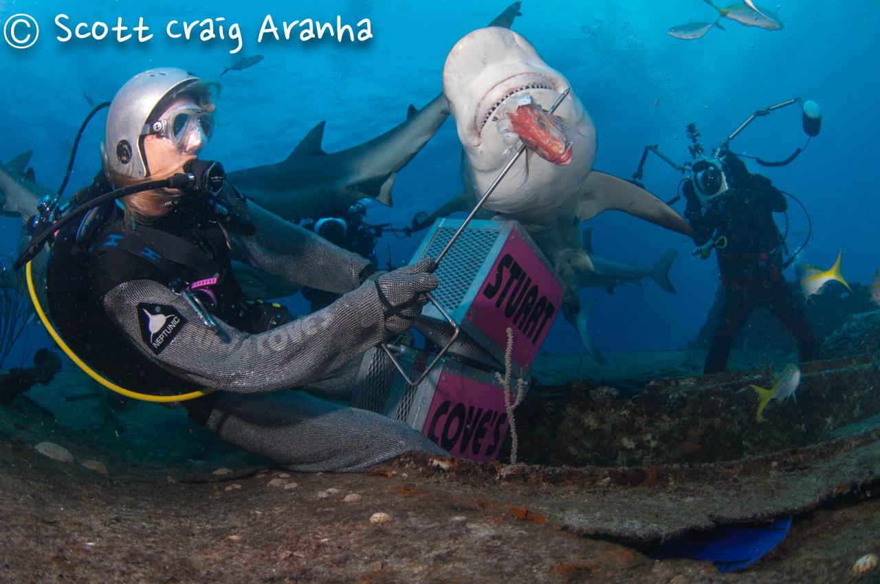 Shark086.JPG