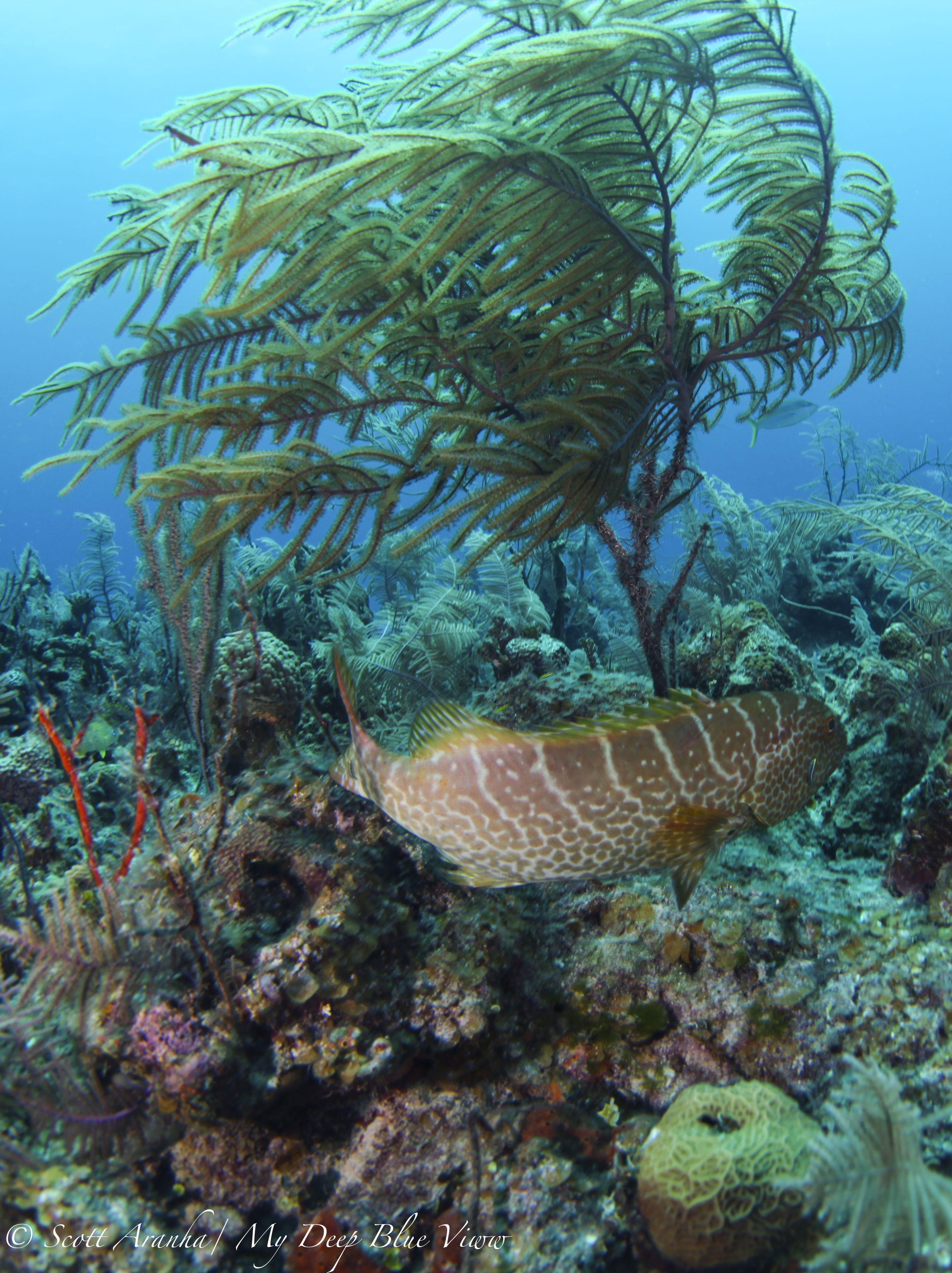 Grouper012.jpeg