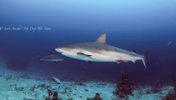 Shark102.JPG