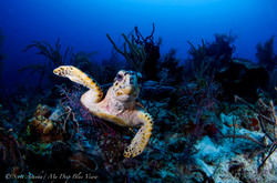 Turtles047.jpeg